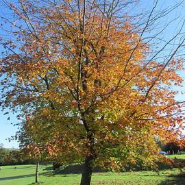 Autumn Tree, Palstone Park, Devon UK by Lesley Evered