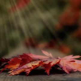 Autumn warmth by Rita Di Lalla