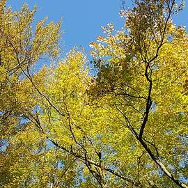 Autumn Yellow by Fang Norwood