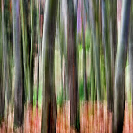 Autumnal abstract woods by Barbara Corvino