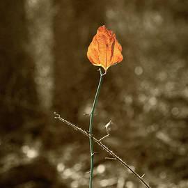 Autumnal Haiku by Yuri Lev