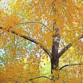 Autumnal Sunshine by Roselynne Broussard
