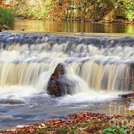 Autumnal Woodland Stream by David Birchall