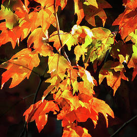 Autumn's Gold by Gardening Perfection