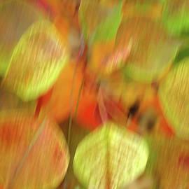 Autunm Blur by Bill Morgenstern