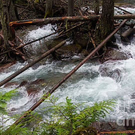 Avalanche Creek-5304 by Gary Gingrich Galleries