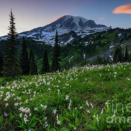 Avalanche Lilly Sunset by Mike Dawson