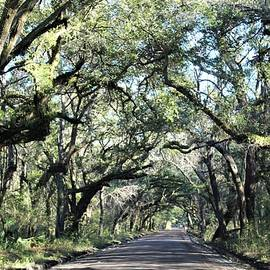Avenue of Oaks by Carol McGrath