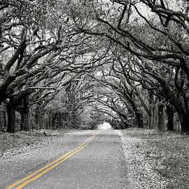 Avenue of Oaks - Switzerland, South Carolina by Matt Richardson