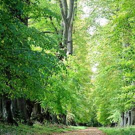 Avenue Of Trees 27 by Lynne Iddon