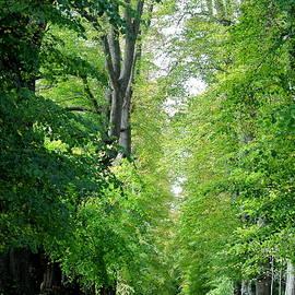 Avenue Of Trees 28 V by Lynne Iddon