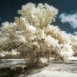 Avery Island Trees Infrared by Jerry Fornarotto