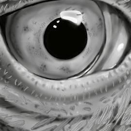 Avian Oculus by Angrulla MF