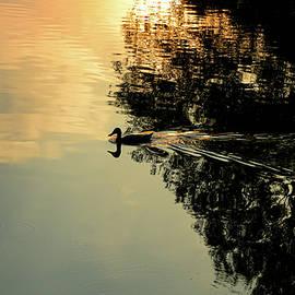 Avon River Reflections by Robert Ratcliffe