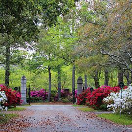 Azalea Cemetery Drive by Cynthia Guinn