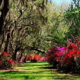 Azalea Pathway by Amy Scheer