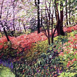 Azaleas In Full Bloom by David Lloyd Glover