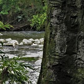 Babinda Creek Rainforest by Joan Stratton