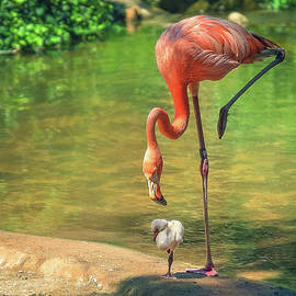Baby Flamingo Learning by Steve Rich