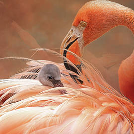 Baby Flamingo by Steve Rich