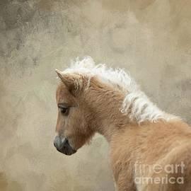 Baby Shetland Pony by Eva Lechner