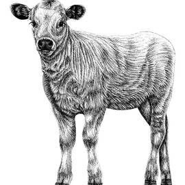 Baby White Park cow - calf ink illustration by Loren Dowding