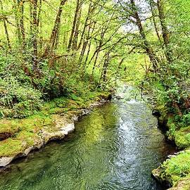 Back To Nature - Tillamook - Oregon by Beautiful Oregon
