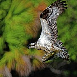 Back to the nest. by Stuart Harrison