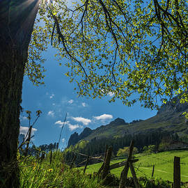 Backlighting to the spring by ACAs Photography