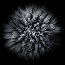 Backyard Flowers In Black And White 68 Flow Version by Brian Carson