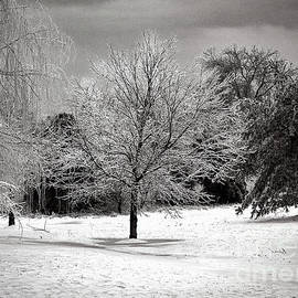 Backyard Tree In Winter - Monochrome by Anthony Ellis