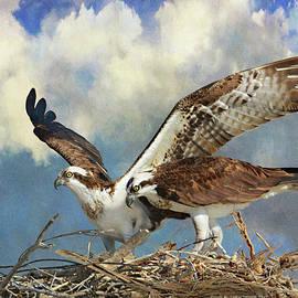 Baja Ospreys On Nest by R christopher Vest