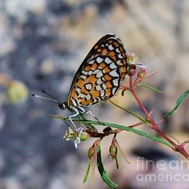 Balancing Butterfly Act by Janet Marie