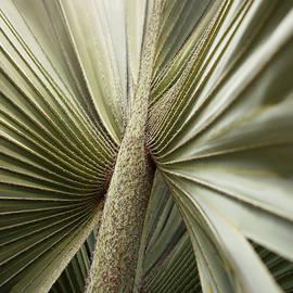 Balboa Park Desert Garden Palm by William Dunigan