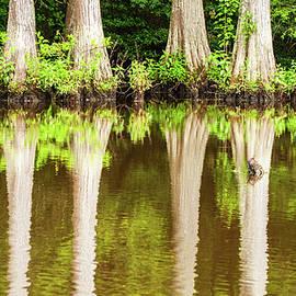 Bald Cypress Trees by Rob Hemphill