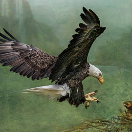 Bald Eagle Landing by Patti Deters