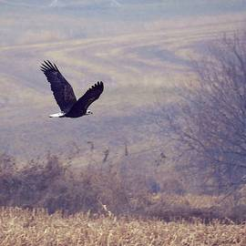Bald Eagle in Frankfort, IL by Peg Donnellan