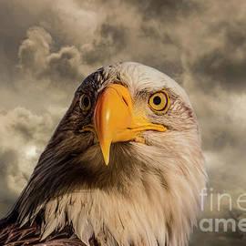 Bald Eagle Portrait 10 by Mitch Shindelbower