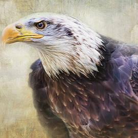 Bald Eagle - The Cloud Dweller by Peggy Collins