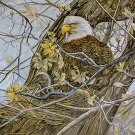 Bald Eagle with Eaglet by Vicky Lilla
