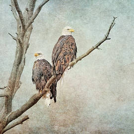 Bald Eagles Raptors Montana by Jennie Marie Schell