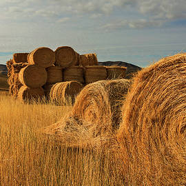 Bales of Gold by John Rogers