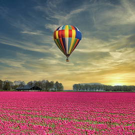 Balloon Over Flower Field  by Anthony Dezenzio