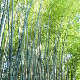 Bamboo Forest Kyoto Japan II by Joan Carroll