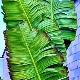 Banana Leaves in Color by Craig Wood