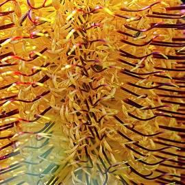Banksi Flower, Australia by Steven Ralser