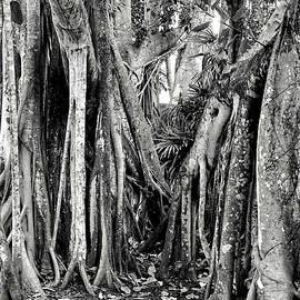 Banyan Forest by Kathi Isserman