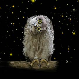Barking Owl At Night 2 by Joan Stratton
