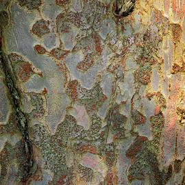 Barking Up a Tree by Karen Adams