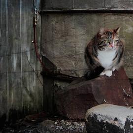 Barn Cat by Linda Bielko